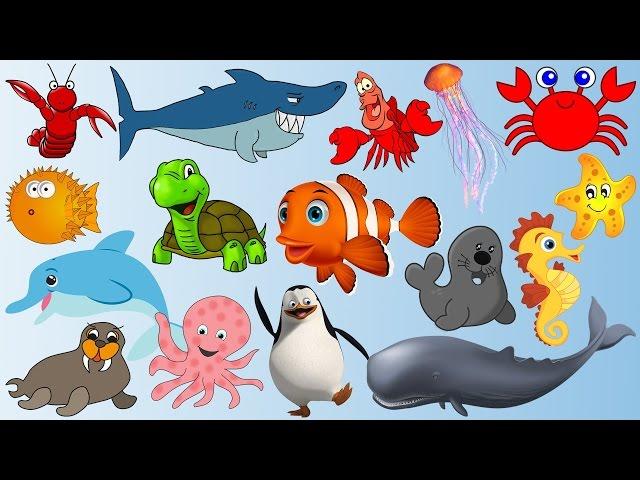 Từ vựng các loài ở dưới nước