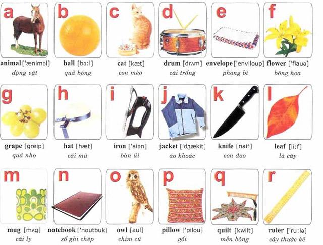 Bảng chữ cái alphabet tiếng Anh - Việt kèm hình ảnh