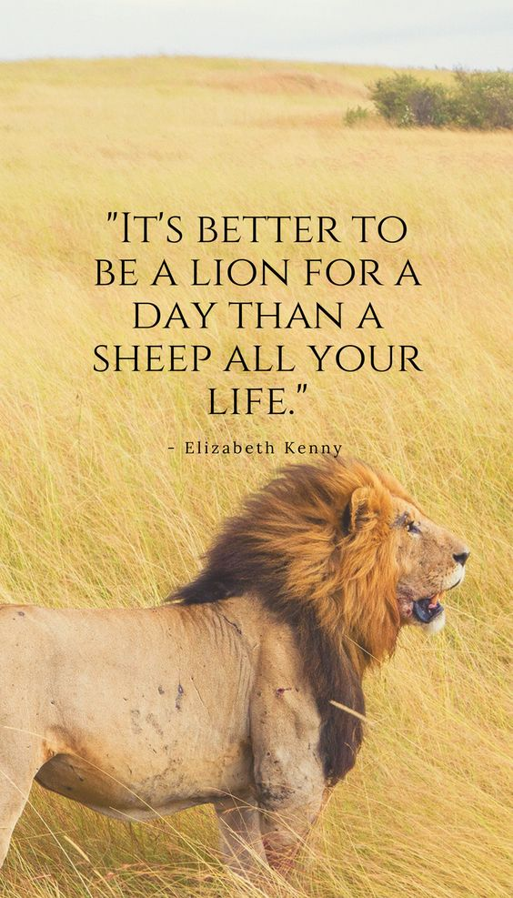 It's better to be a lion for a day than a sheep all your life